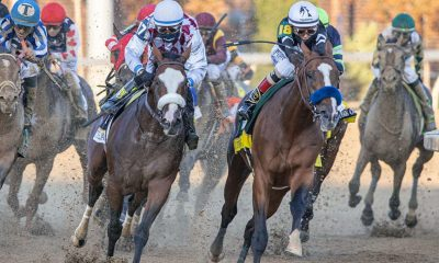 tiz the law preakness stakes